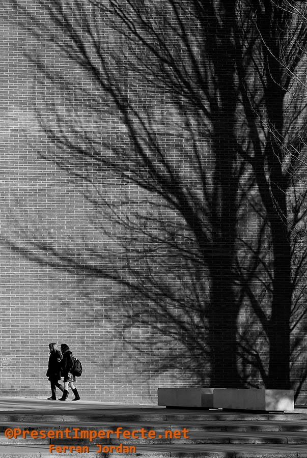 Bajo la sombra de árboles urbanos
