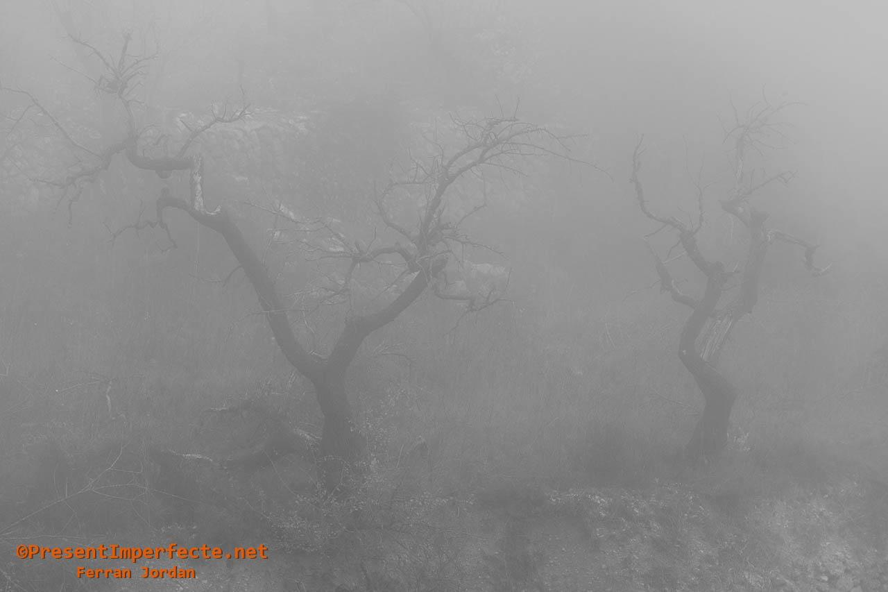 Uvas de niebla