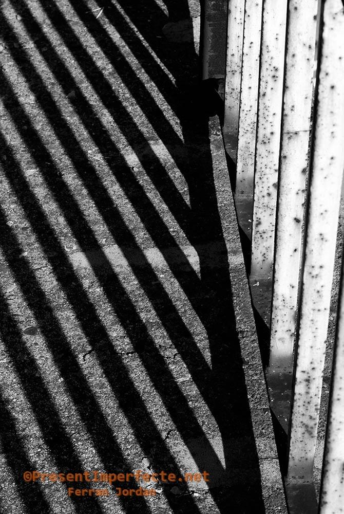Urban zebra