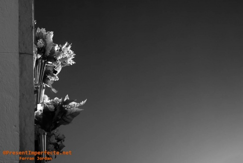 Flors del capvespre